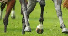 На Сарненщині кінь задушив чоловіка, провалившись у дірку