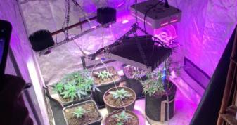 Ратнівчанин вирощував коноплі у власному домі