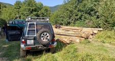 Встигли вирізати майже півсотні дерев: на Свалявщині впіймали групу «чорних лісорубів»