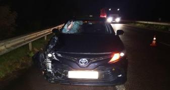 У Горбакові під колесами автомобіля загинув пішохід