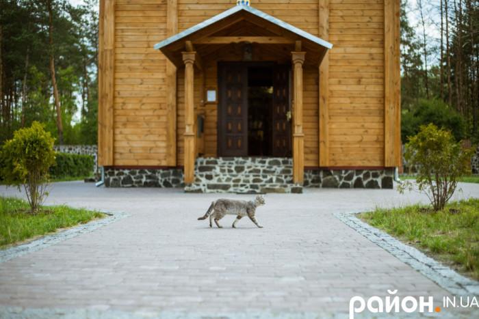 Часто жителі ближніх сіл підкидають сюди котів