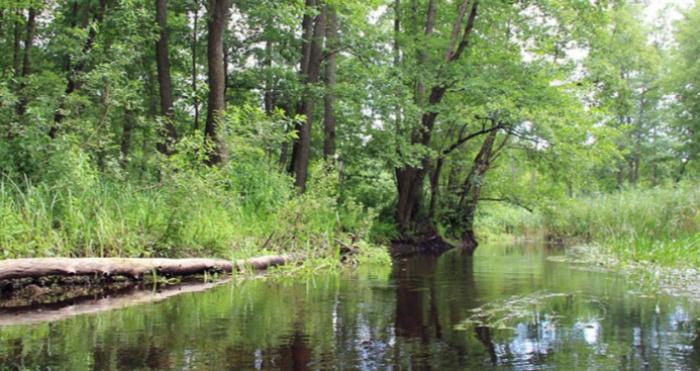 річка Стохід