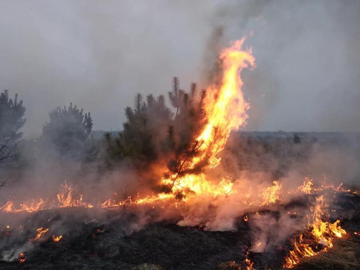 На Ківерцівщині люди спалили молодий ліс