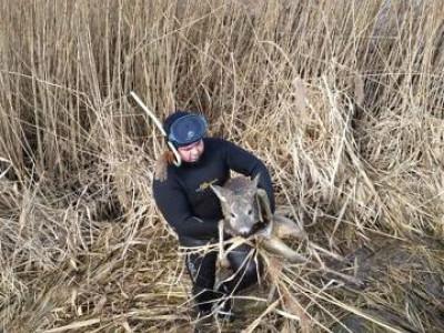 На Демидівщині врятували козулю