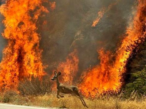 Маневицькі лісівники закликають не випалювати суху траву