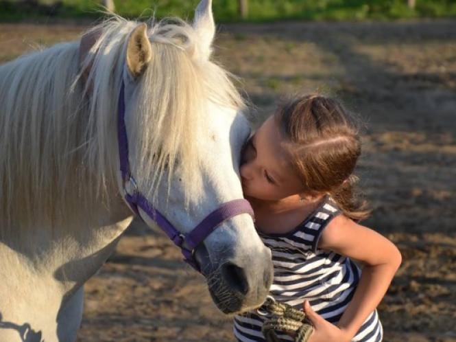 Вишнів: як допомагають коні дітям з ДЦП