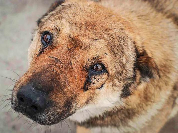 У Ковелі чоловік штовхнув пса під колеса маршрутки  / Фото ілюстративне