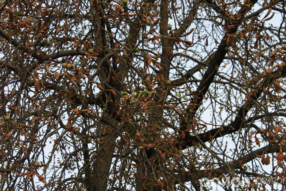 Сухе листя опадає, а молоде розпускається