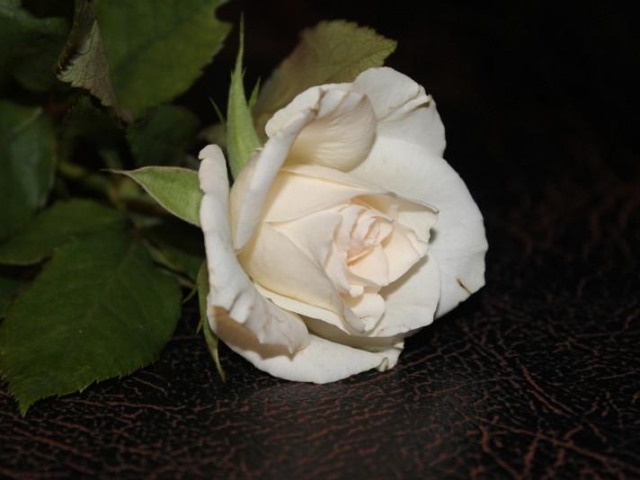 «Сьогодні я дарую тобі свою щиру молитву, безмежно любляче материнське серце і білі троянди...»