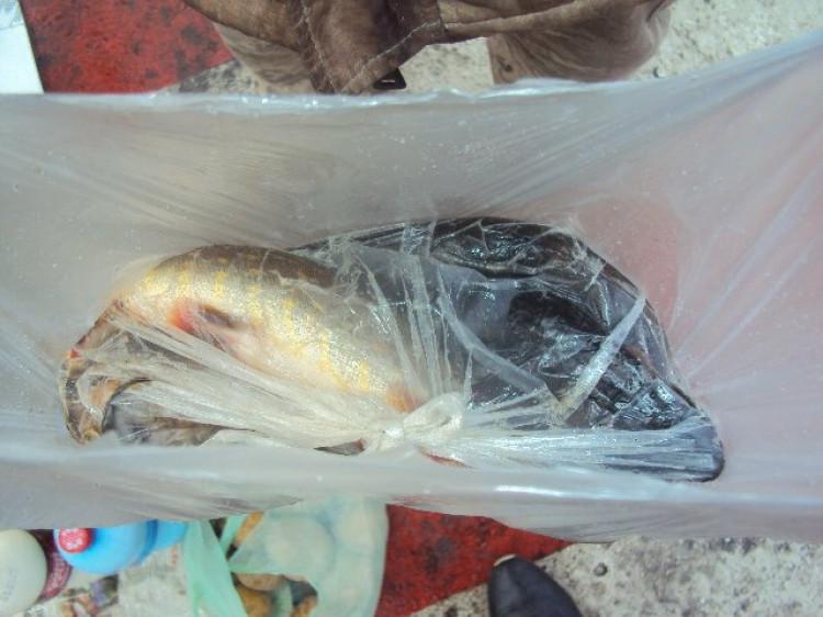 Рибоохоронний рейд на ринках у місті Ковель.