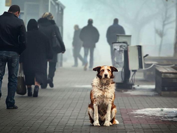 Безпритульна собака / Фото ілюстративне