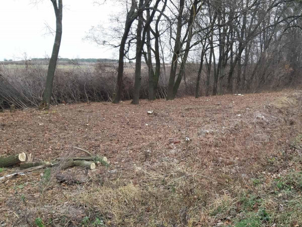 Зрубані дерева / САД у Волинській області