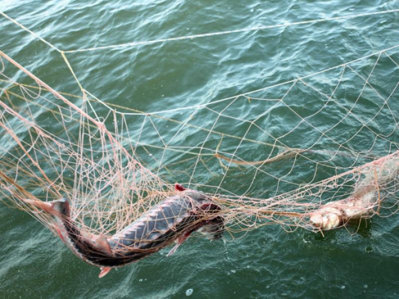 Чоловіки ловили рибу сіткою