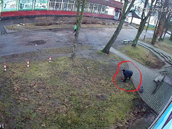 Жінка викрадала кущ юки