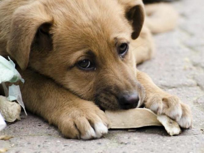 У Луцьку на відлов безпритульних тварин витратять 300 тисяч