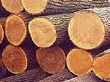 У лісництві розкрили крадіжку деревини