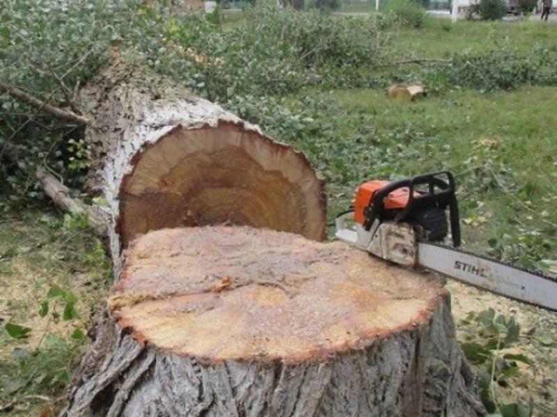 Зріжуть дерева у Луцьку