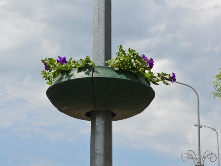 Центр Ковеля прикрашають квітами у горщиках