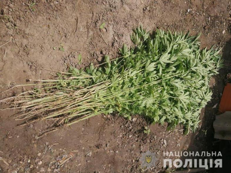 Лучанка вирощувала вдома плантацію коноплі