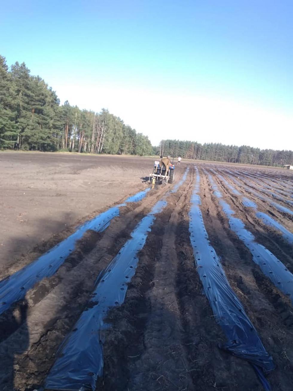 Заробітки обіцяють не менші, як у Польщі: в Прилісненській ОТГ будуть садити ягоди