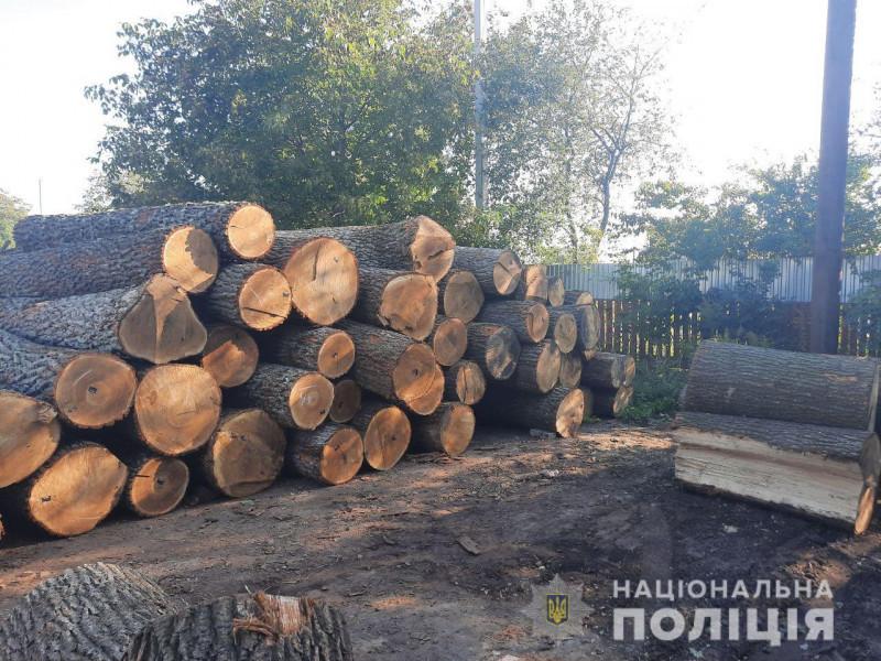 Незаконно зрублені колоди дуба