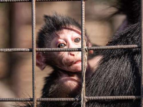 У луцькому зоопарку народилося мавпеня Любарт