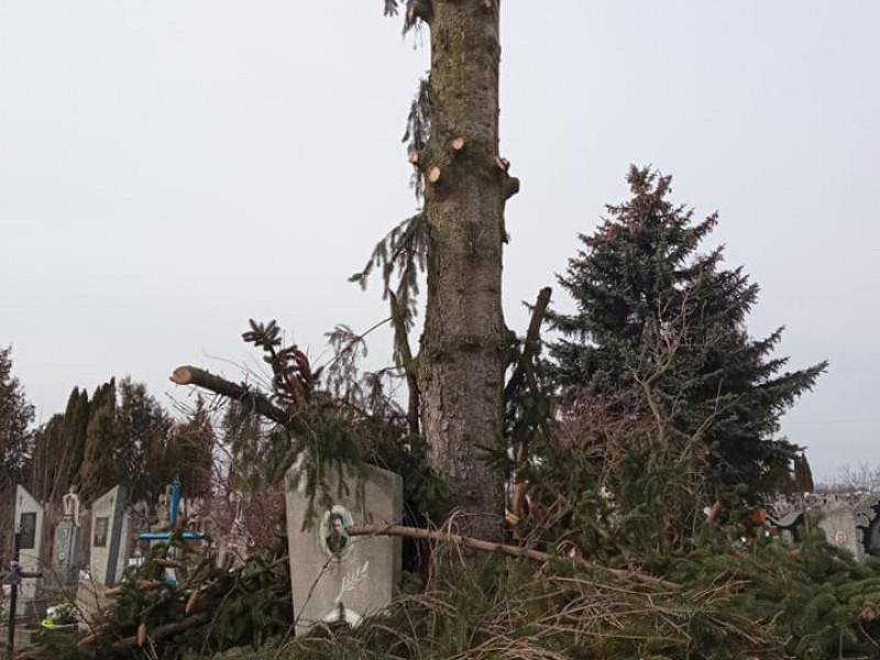 На міському кладовищі в Гаразджі здійснювали обрізку дерев