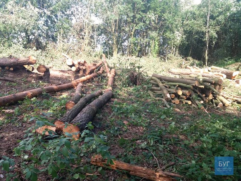 Кажуть, на дерева напав короїд, а санітарна вирубка лісу – це дієвий метод боротьби із цим жуком