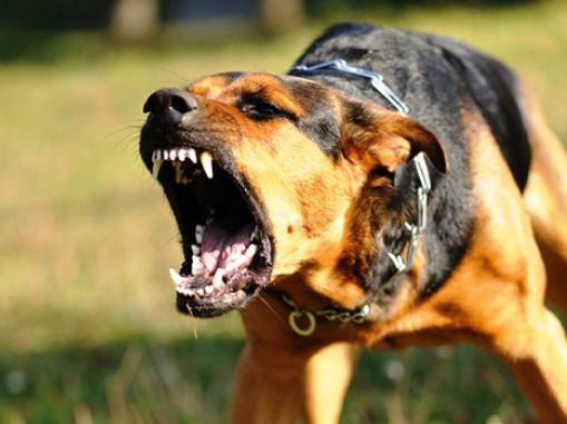 У центрі Нововолинська пес накинувся на жінку