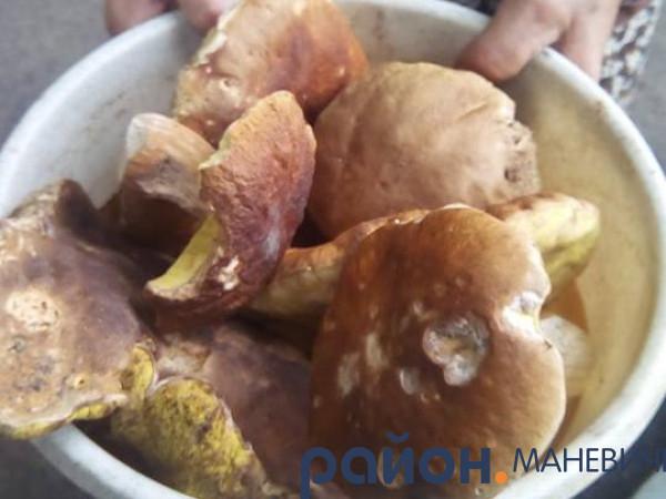 Маневичанка похвалился грибами, що виросли просто під хатою