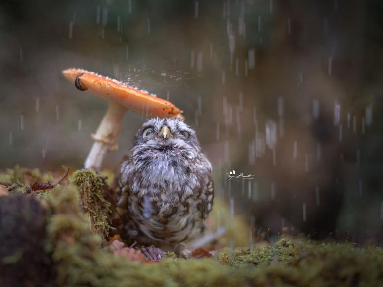 Волинян застерігають: насувається непогода