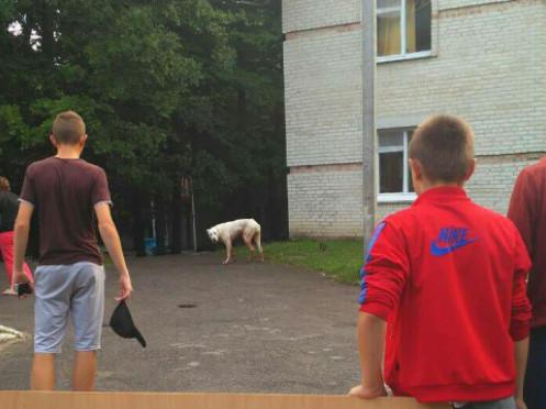 Пес перестрибнув паркан висотою метр 80 сантиметрів