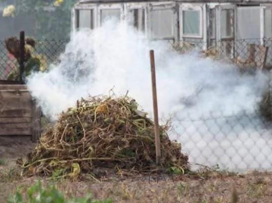 Спалювання сухостою у Луцьку