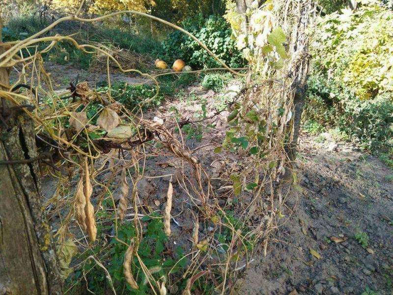 Демонтований паркан