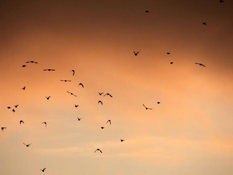 Захід сонця на світлинах ківерцівського фотографа