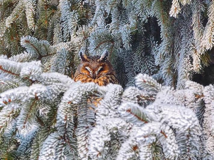 зима в Луцьку
