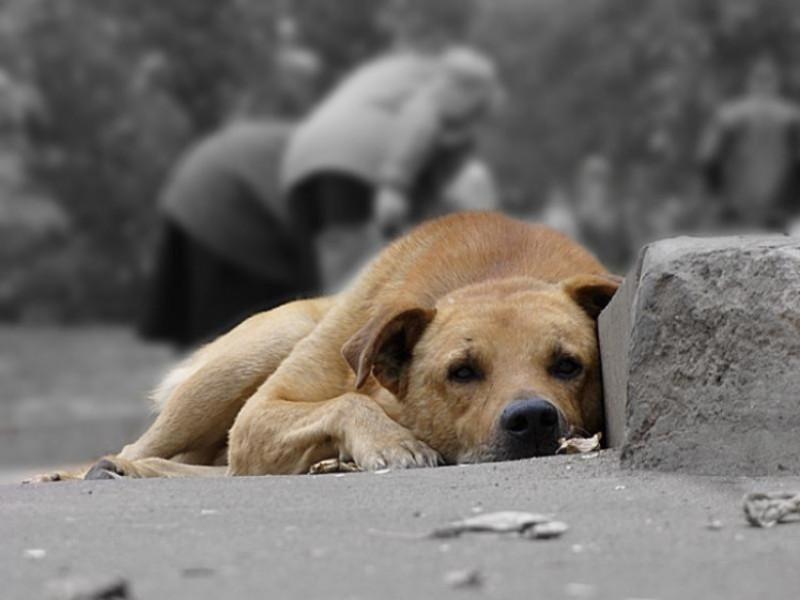Безпритульний собака