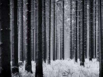 На Ратнівщині уночі білоруси забули свою дитину у лісі
