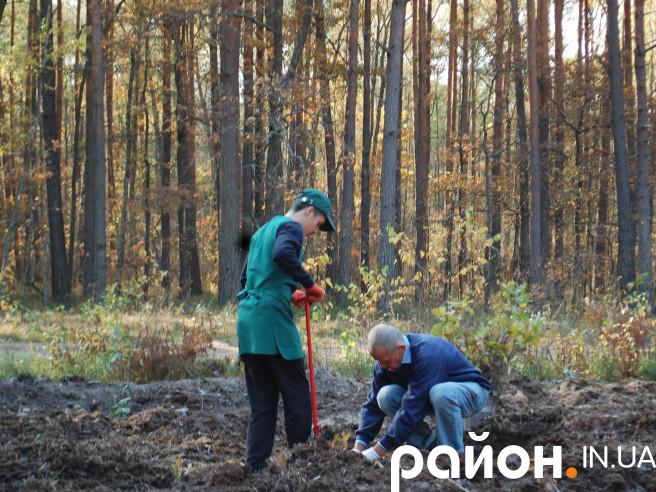 Журналісти, письменники, лісники та учні висадили дуби та сосни