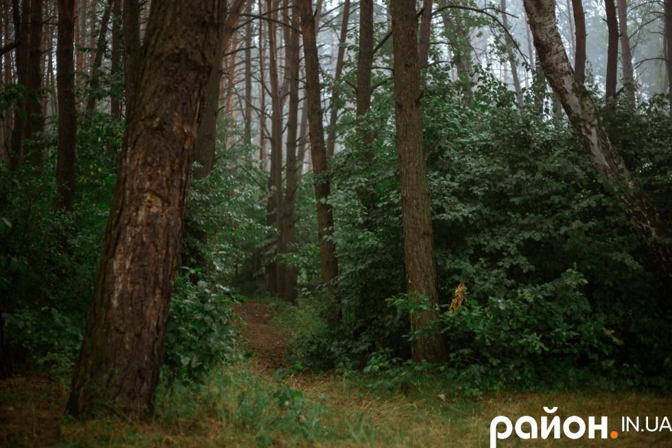 Ліс після дощу
