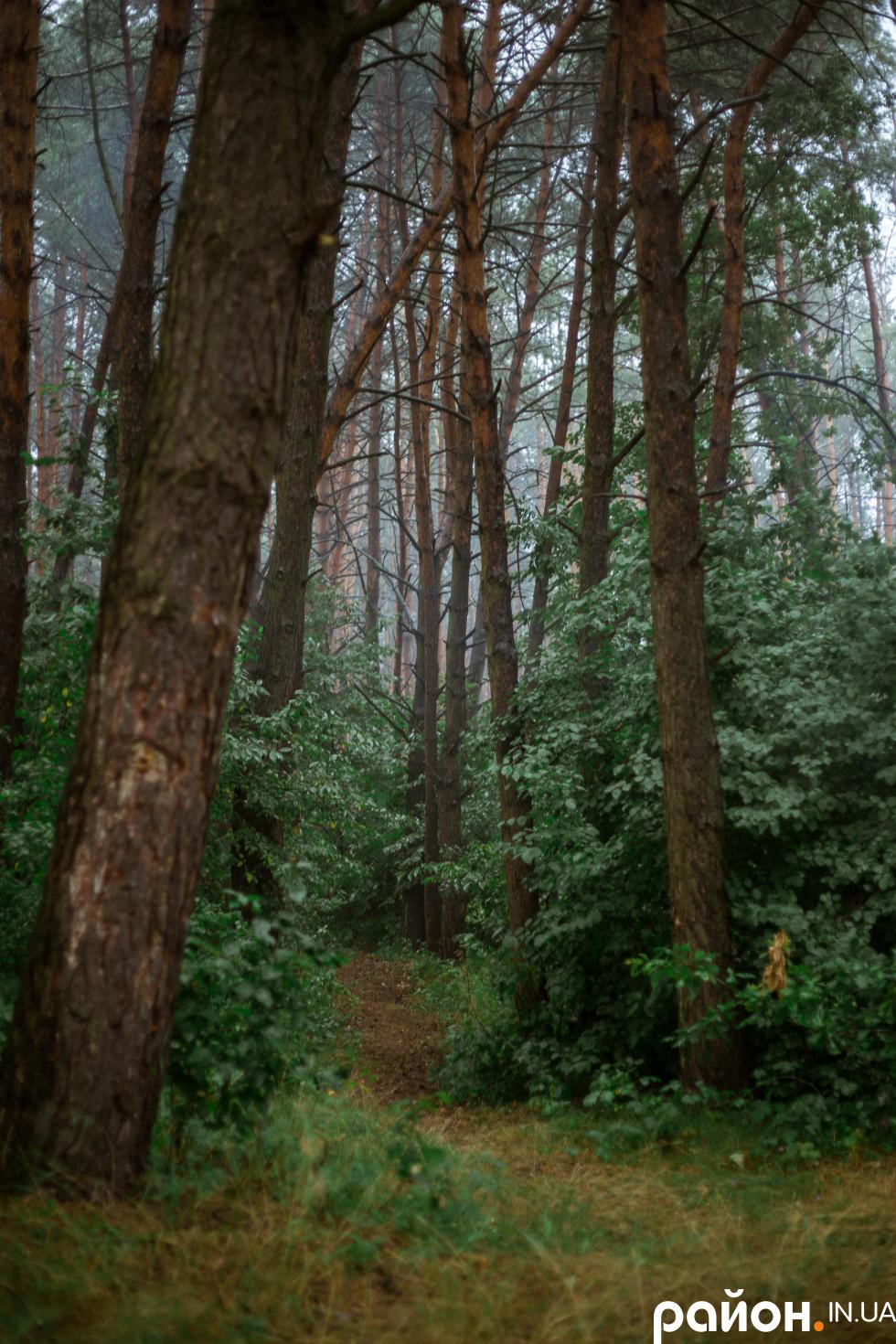 Перевалівський ліс має глибокий смарагдово-зелений колір