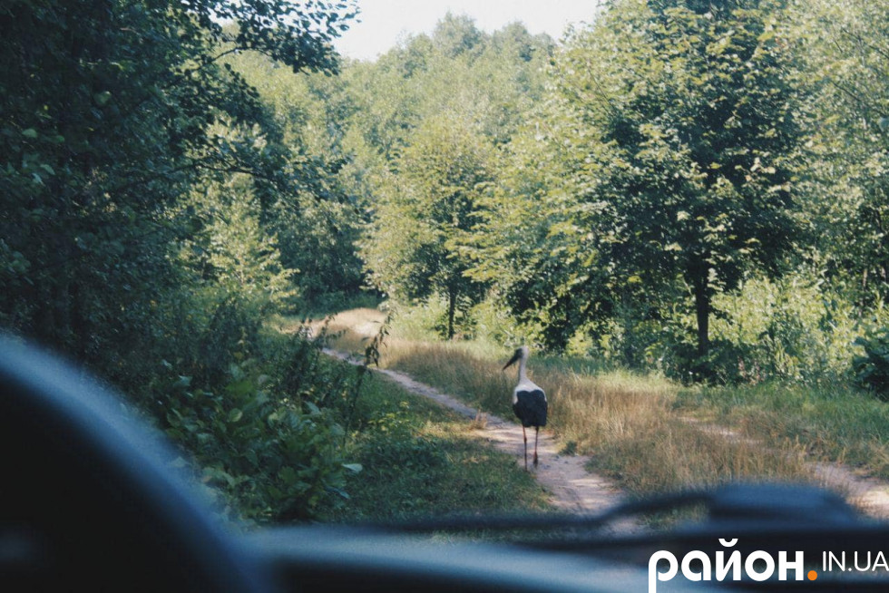 Шлях додому вказував лелека