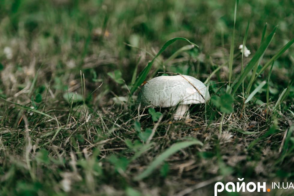 Грунти у Сокиричівському лісництві славляться родючістю